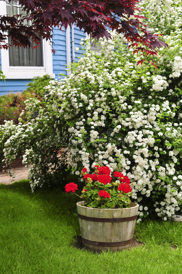 Front yard of a house. Landscaped front yard of a house with flowering garden royalty free stock images