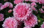 Августовские цветы фото – 10 растений, цветущих в августе