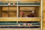 Как сделать гнездо для кур – чертежи и пошаговая инструкция по изготовлению!
